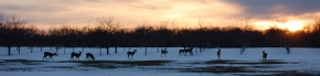 group_deer_sunset_snow