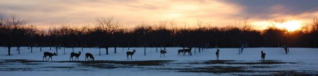 group_deer_sunset_snow