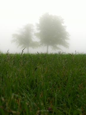 Trees Fog Grass
