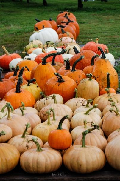 Wet Pumpkins