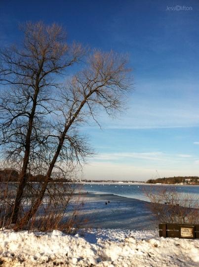 Boardman Lake Winter Swans