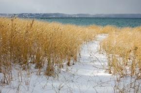 Golden Winter Grass
