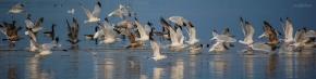 Water Foul Take Flight