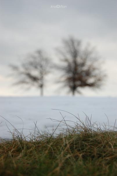 Winter Trees Snow Grass