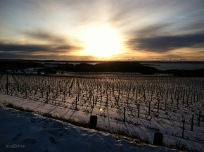 Winter Vineyard Sunset - Chateau Grand Traverse