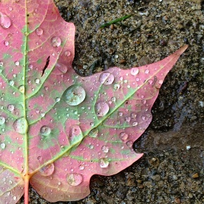 Fall Leaf Droplets Wet Sidewalk