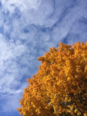 Gold Leaves on a Blue Swirly Sky
