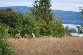 Three Deer Glen Lake