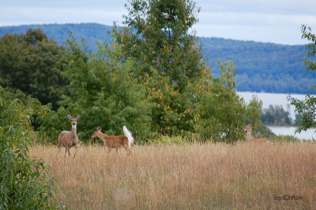 Three Deer Glen Lake