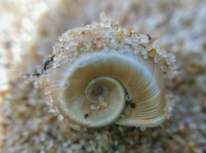 Golden Spiral Shell & Sand Macro