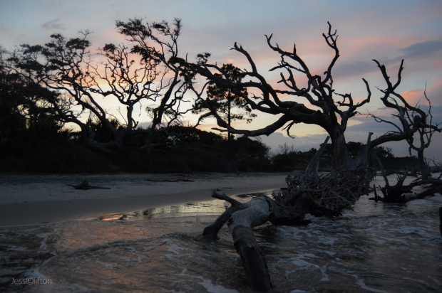 Jekyll Island Driftwood Beach Sunset