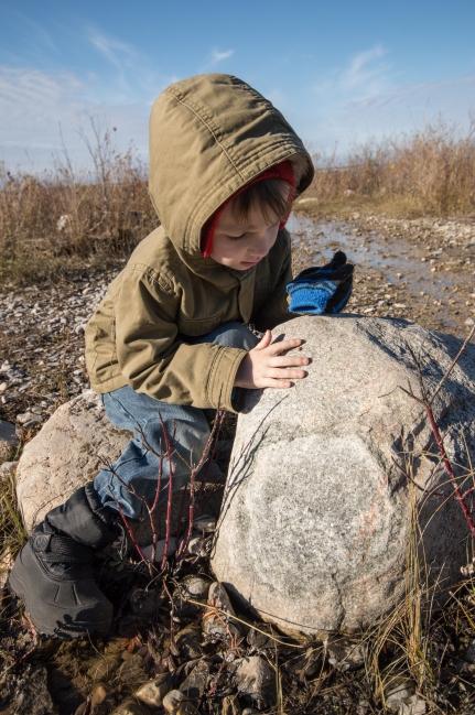 Inspecting Ladybugs rock